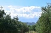 APGAV00008, Olive tree Plot between Almirida-Gavalohori
