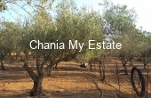 PLKAM00045, Parcel for sale in Platanias, Chania, Crete