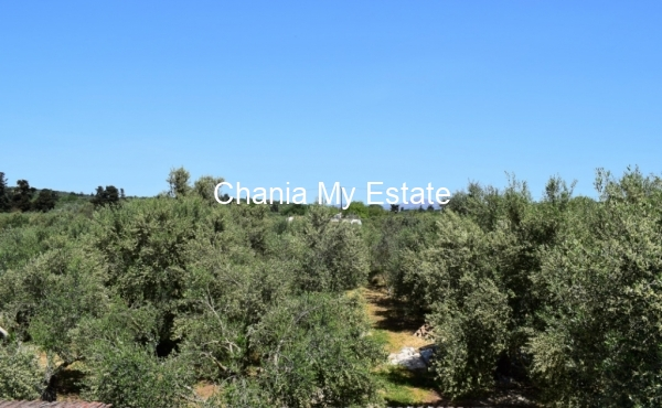 Backyard with olive trees